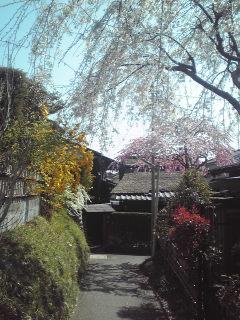 色づく草花.jpg